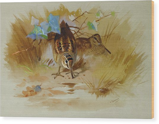 Woodcock In A Sandy Hollow By Thorburn Wood Print