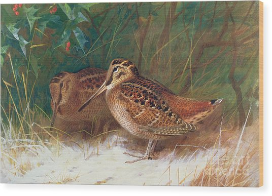 Woodcock In The Undergrowth Wood Print