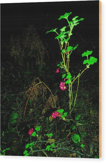 Woodland Bush Wood Print by Mel Crist
