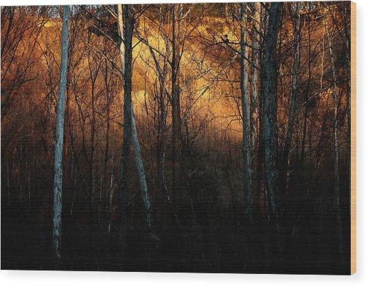 Woodland Illuminated Wood Print