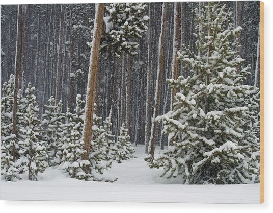 Woodland Snowstorm In Yellowstone Wood Print