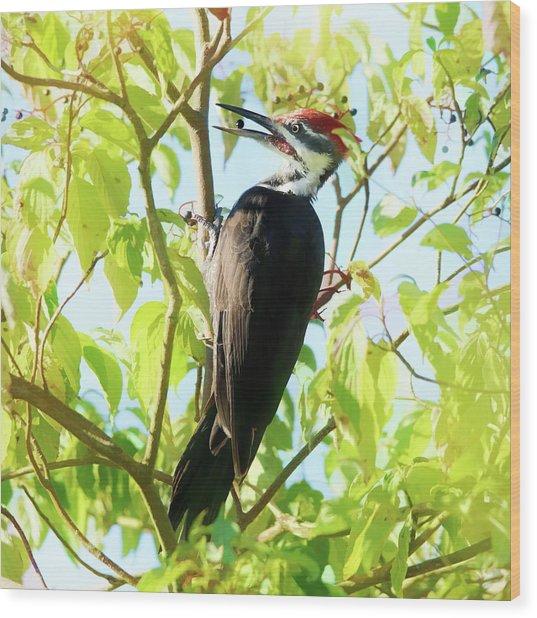 Woodpecker Eating Elderberries Wood Print