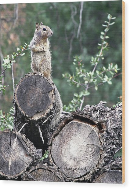 Woodpile Squirrel Wood Print