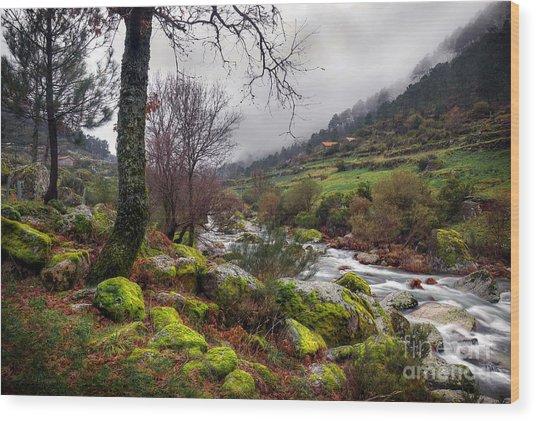 Woods Landscape Wood Print