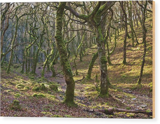Woods Near Badgeworthy Water Exmoor Wood Print