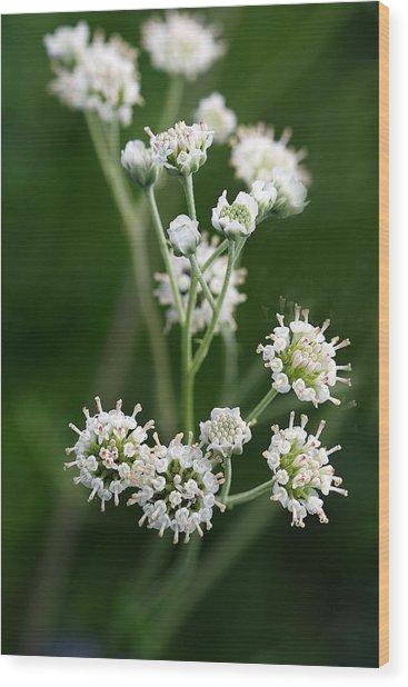 Wooly Whites Wildflowers Wood Print by Linda Phelps