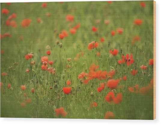 Worcestershire Poppy Field Wood Print by Wayne Molyneux