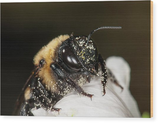 Worker Bee And Pollen Detail Wood Print