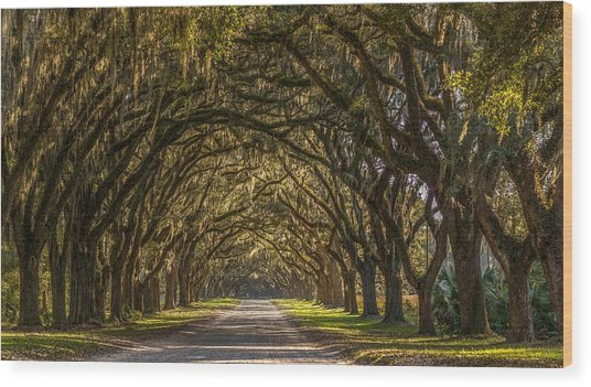 Wormsloe Historic Site Wood Print