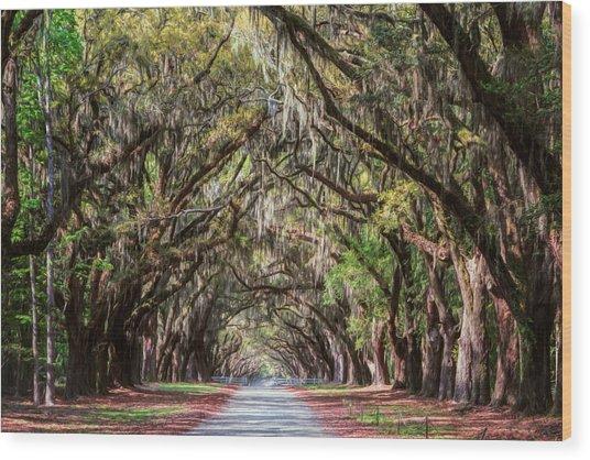 Wormsloe Plantation Oaks Wood Print