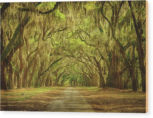 Wormsloe Plantation Oaks Wood Print