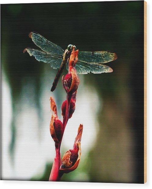 Wornout Dragonfly Wood Print