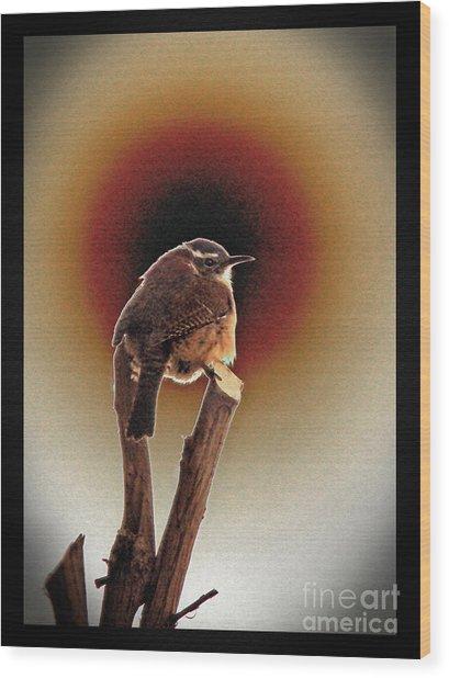 Wren At Sundown Wood Print by Sue Melvin