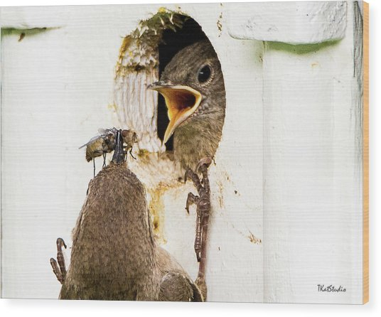 Wren Breakfast Wood Print