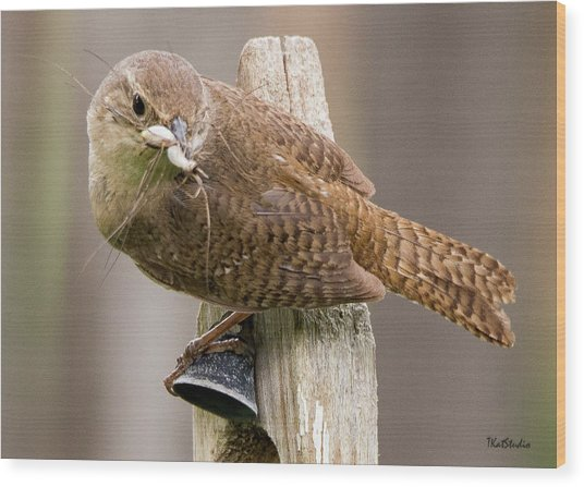 Wren Ringing The Dinner Bell Wood Print
