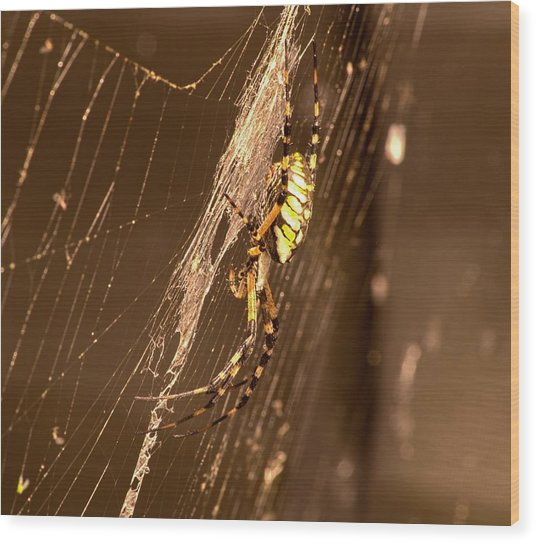 Wood Print featuring the photograph Writing Spider by Willard Killough III