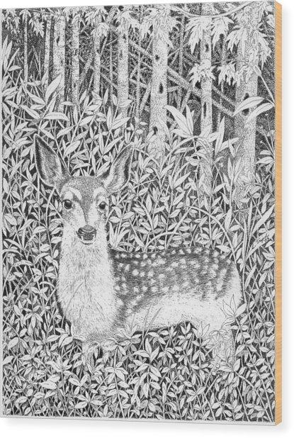 Yearling Wood Print