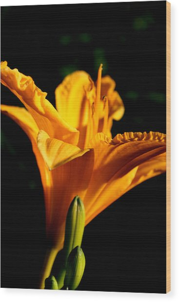 Yellow Wood Print by Alexandra Harrell