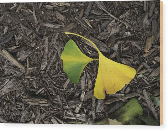 Yellow And Green Gingko Wood Print
