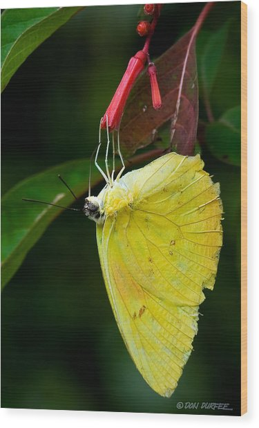 Yellow And Red Wood Print by Don Durfee