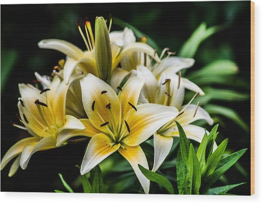 Yellow And White Lilys Wood Print