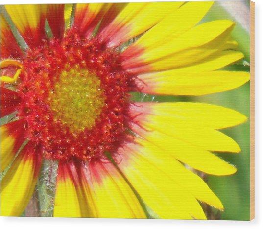 Yellow Wood Print by Angela Christine