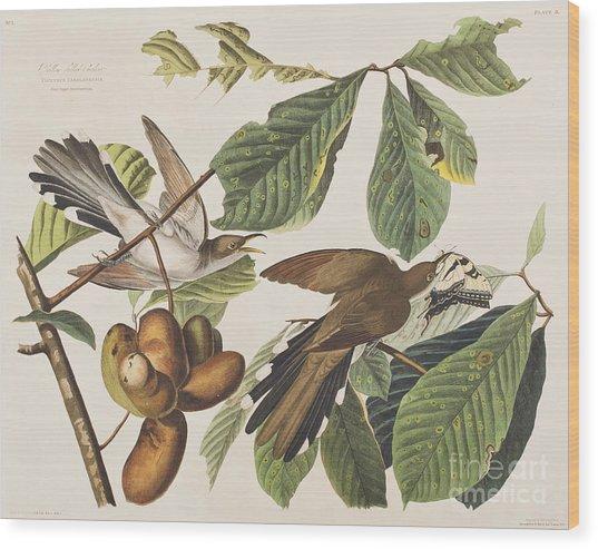 Yellow Billed Cuckoo Wood Print