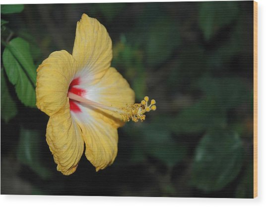 Yellow Bloom Wood Print
