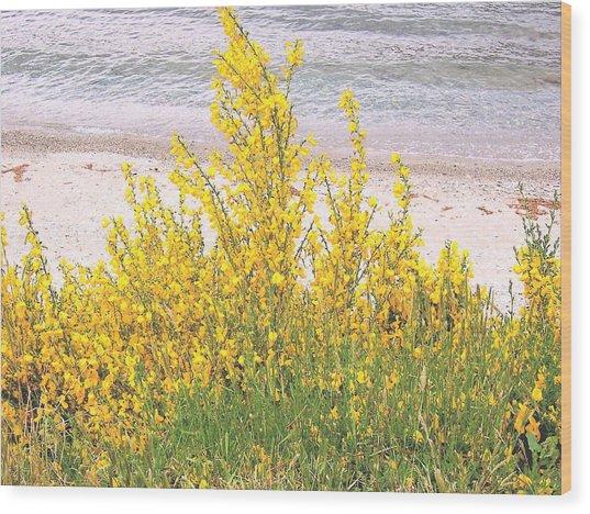 Yellow Brush Wood Print