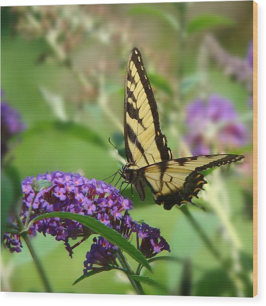Yellow Butterfly On Purple Wood Print