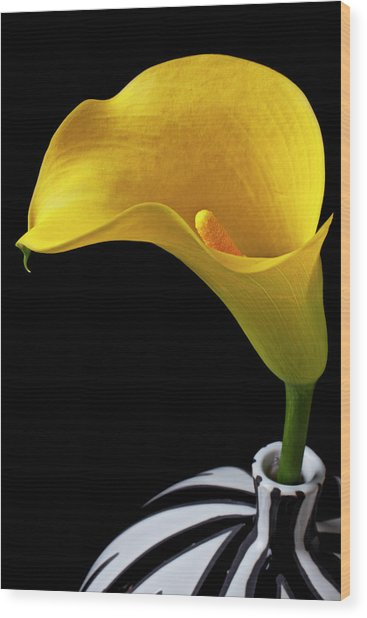 Yellow Calla Lily In Black And White Vase Wood Print