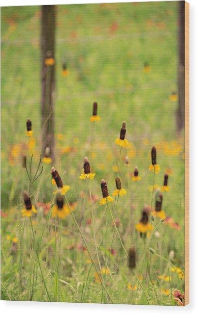 Yellow Cone Flower Wood Print