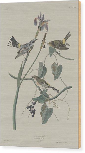Yellow-crown Warbler Wood Print