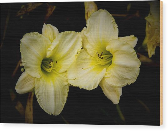 Yellow Day Lilies Wood Print