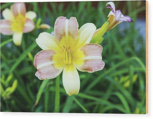 Yellow Daylily Wood Print