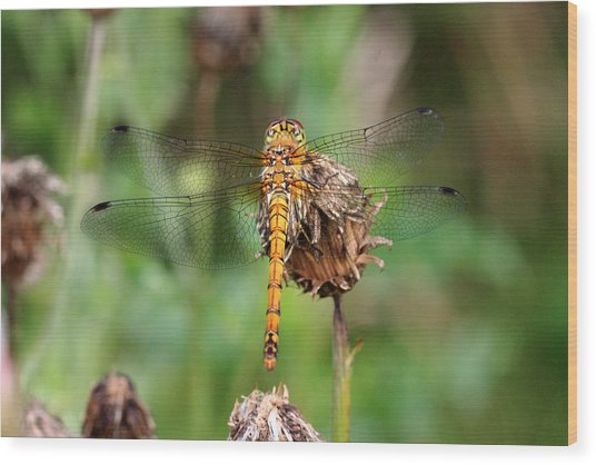yellow Dragonfly Wood Print by Pierre Leclerc Photography