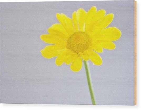 Yellow Drops Wood Print