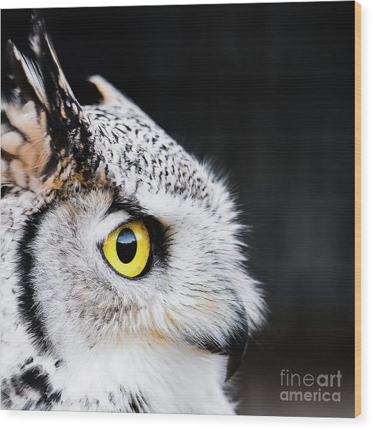 Yellow Eye Wood Print
