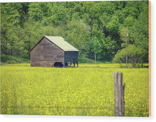 Yellow Field Rustic Shed Wood Print