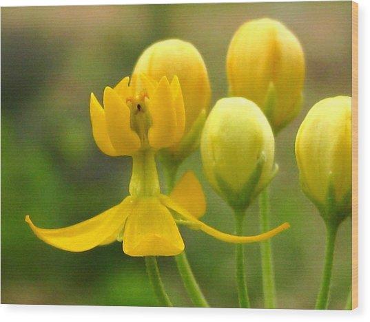 Yellow Flick Wood Print by Diana Moya