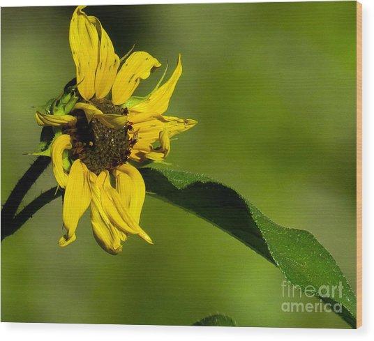 Yellow Flower 1 Wood Print
