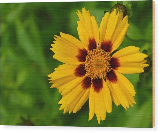 Yellow Flower Wood Print by Edward Myers