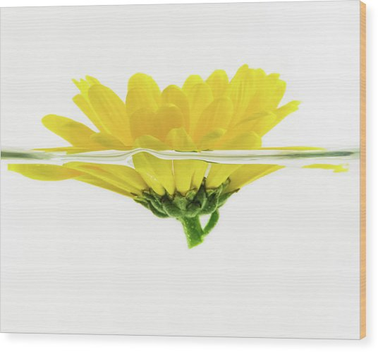 Yellow Flower Floating In Water Wood Print