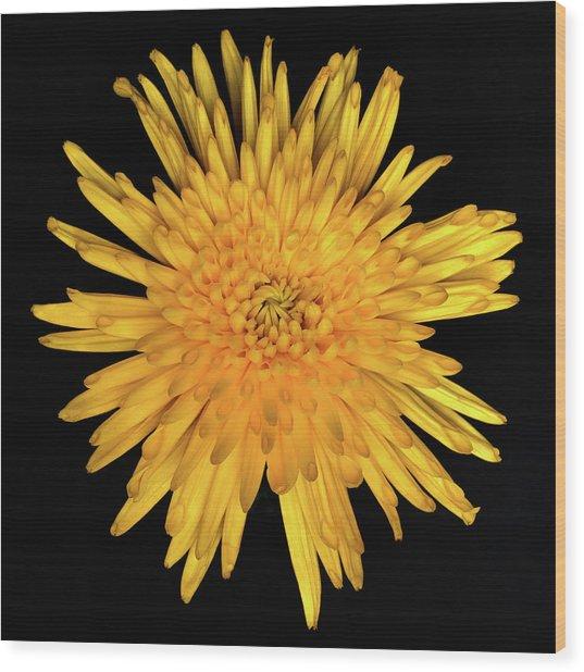 Yellow Flower Macro Wood Print