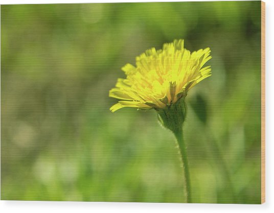 Wood Print featuring the photograph Yellow Flower by Nikos Stavrakas