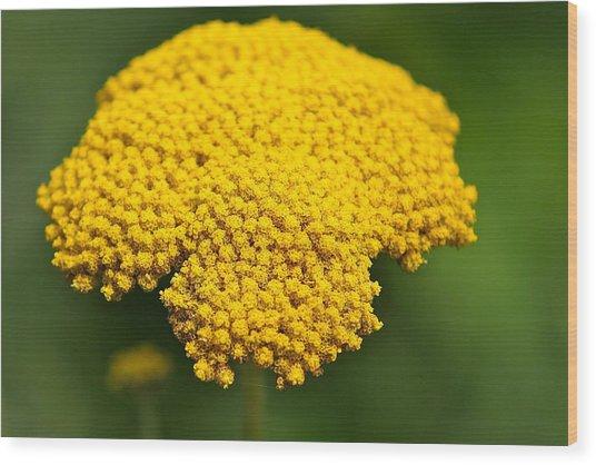 Yellow Flower Wood Print by Robert Joseph