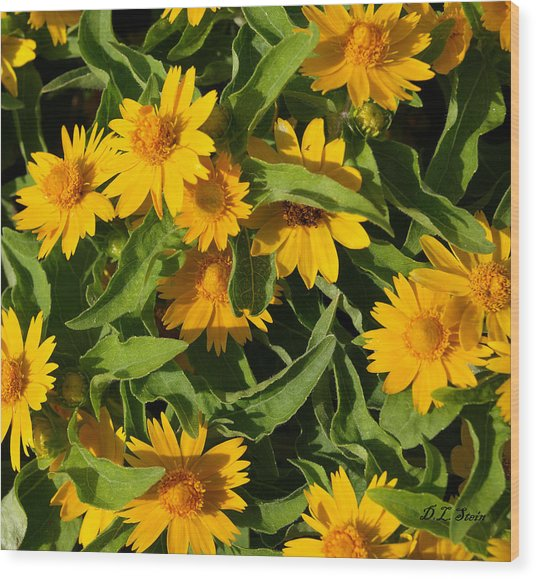 Yellow Flowers Wood Print by Dennis Stein