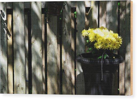 Yellow Flowers In A Black Flower Pot 2wc2 Wood Print