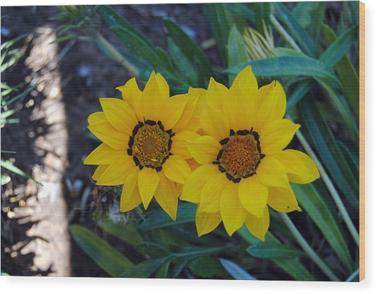 Gazania Rigens - Treasure Flower Wood Print