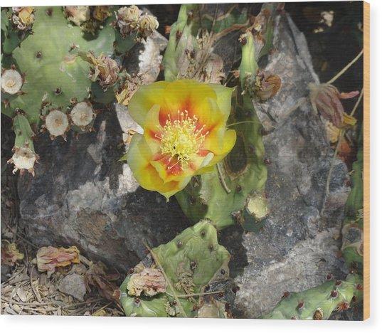Yellow Cactus Flower Blossom Wood Print